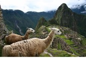 People love to travel to see the animals in Peru