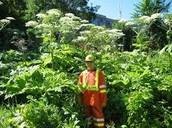 A person in full body suit standing between the plants