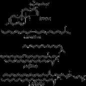 Lipids and nuckeic acids