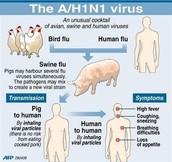 Transmission of H1N1