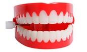 How teeth works