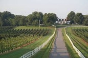 Little River Winery & Vineyard