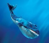 הצלת הלוויתנים