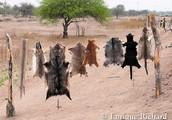 Tráfico de Fauna