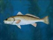 Channel Bass