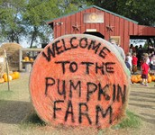 Big Orange Pumpkin Farm field trip (update)