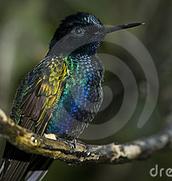 its a humming bird