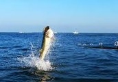 Tips for Adventures trip associated with Salmon sport fishing throughout Ketchikan