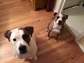 Bella & Ezra