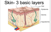What is a system's organ tissue ???