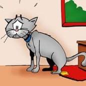 Redenen waarom een kat zindelijkheid training zou moeten krijgen.