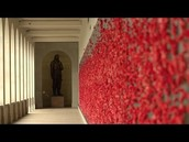 This is a picture of all the poppies in sydney