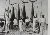 Hemingway Fishing