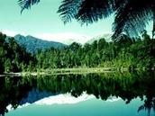 Broadleaf Evergreen Forests