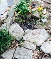 Our gorgeous frog pond.
