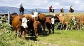 Ranch sizes increasing
