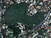 A urbanização colabora muito para o desmatamento.