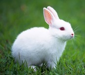 Holly Rabbit in animal form