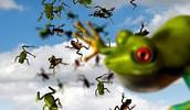 מכת צפרדע