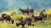 Kerala Trip Specials - Kerala Wildlife