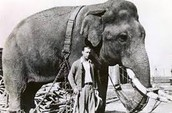 And yes, there is an elephant on acid experiment