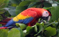 Parrot eating Seed