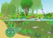 Les different types des écosystèmes