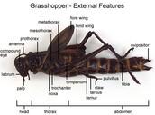 External view of Grasshopper