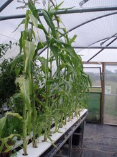 What is the definition of Hydroponics?