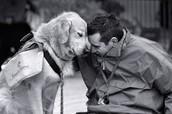 Animal/ human relationships