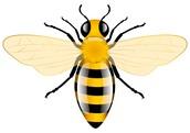 NEWS: Citizen Bee Regional Winner from HEB ISD