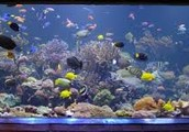 Are gadget keeps fish tanks clean you put the stick at the bottom of the fish tank and keeps it clean for 6 to 9 months
