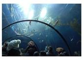 Day 4: March 16 Went to: The Aquarium of Quebec