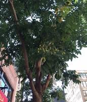 KA's Tree!