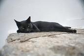 Inactieve kat