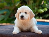 Meet Sam