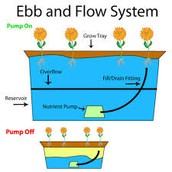 The Ebb and Flow