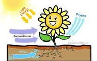 Cycle of photosynthesis