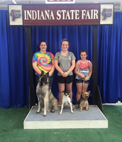 Indiana State Fair dog show 2015