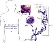 Is Cancer Genetic?