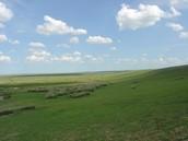 Minnesotan grass and farm land