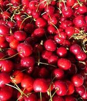 Utah's State Fruit