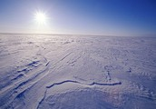 What is Artic Tundra?