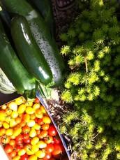 Judkins P Patch Community Gardeners,