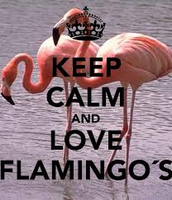 flamingos#3