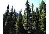 Coniferous Forests are located around the globe.