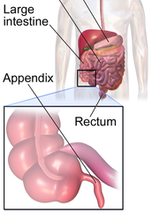 Where is the appendix?