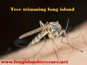 Long island tree service