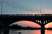 Bats & Bridges Activities and Assignments