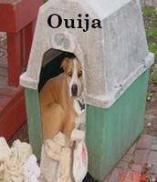Ouija by Stanley B.